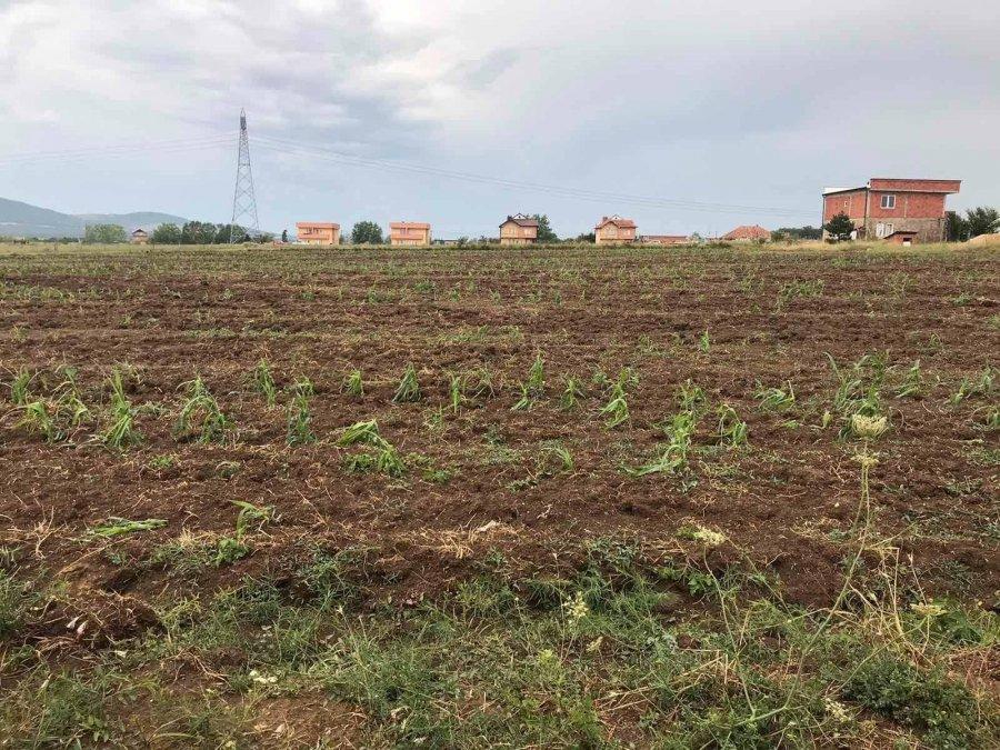 احتمال جبران خسارت محصولات ناشی از باران و تگرگ در درناس در نظر گرفته شده است